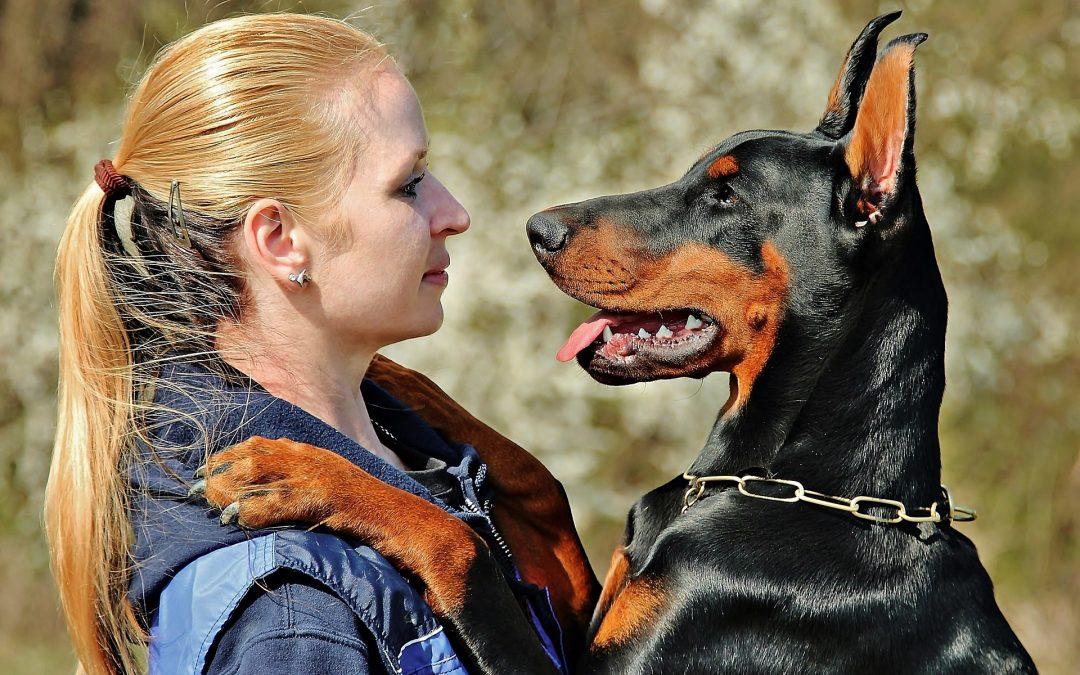 ¿Obligatorio asegurar un perro?